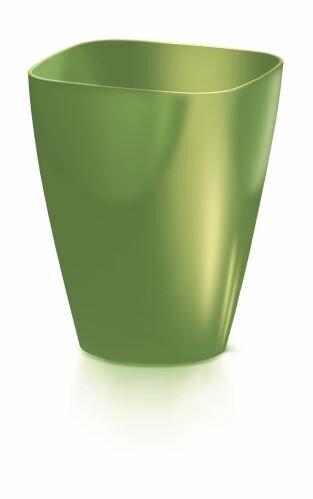 olivová
