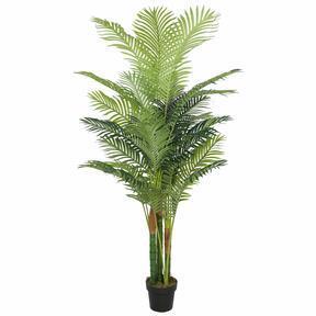 Umalas palma Hawai 195 cm