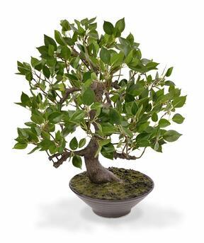 Umělá bonsaj Fíkus Wiandi 45 cm