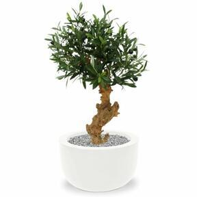 Umělá bonsaj Olivovník 60 cm