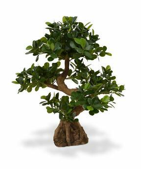 Umělá bonsaj Panda 70 cm