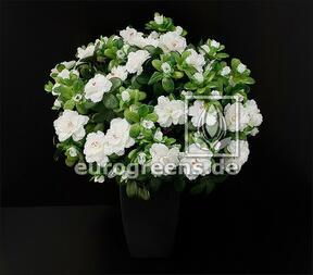 Umělá kytice Belgická Azalka bílá 40 cm