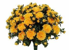 Umělá kytice Chryzantéma světle-žlutá 35cm