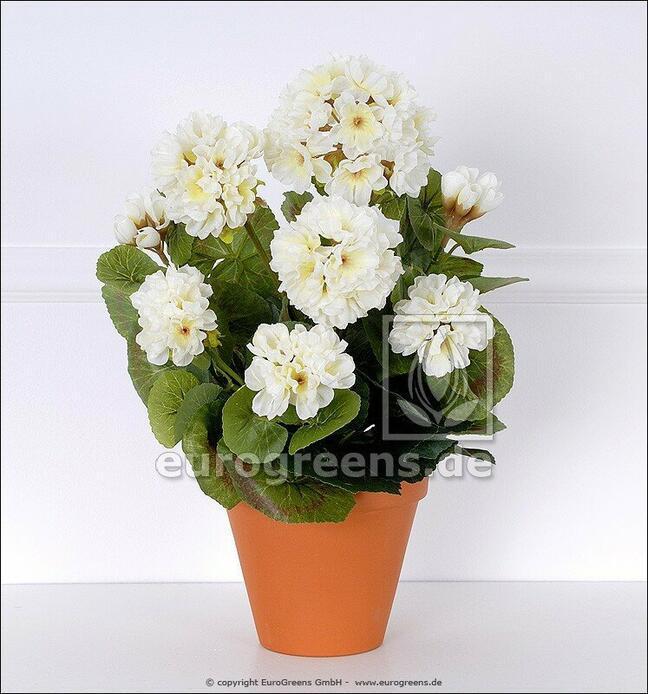 Umělá kytice Pelargónie bílá 40 cm