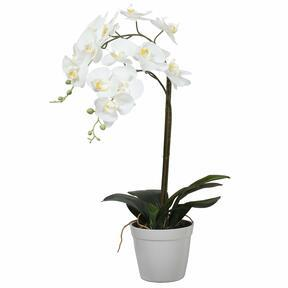 Umělá Orchidea bílá 65 cm