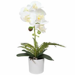 Umělá Orchidea bílá s kapradin 37 cm