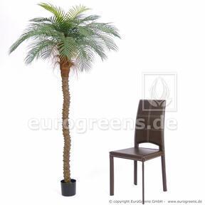 Umělá palma Datlovník senegalský 200 cm