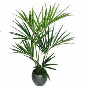 Umělá palma Kentia 135 cm