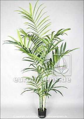 Umělá palma Kentia 220 cm