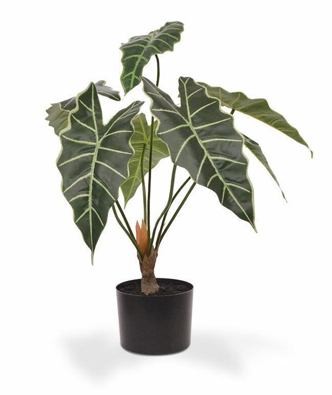 Umělá rostlina Alokázie Amazonica 60 cm
