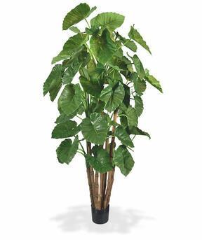 Umělá rostlina Alokázie Calidora 210 cm