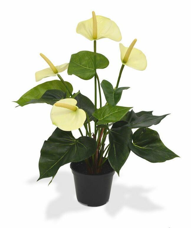 Umělá rostlina Anthurium bílá 40 cm