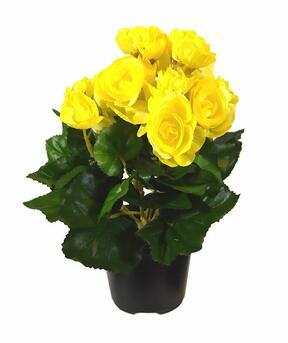Umělá rostlina Begónie žlutá 25 cm