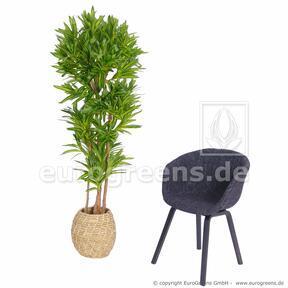 Umělá rostlina Dracena Compacta 170 cm