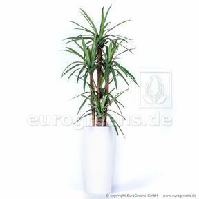 Umělá rostlina Dracena lemovaná 140 cm