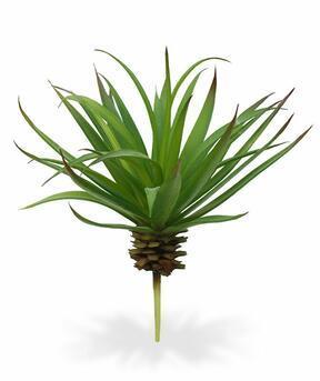 Umělá rostlina Dracena lemovaná 18 cm