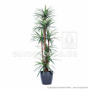 Umělá rostlina Dracena lemovaná 200 cm
