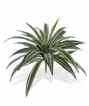 Umělá rostlina Dracena voňavá 40 cm