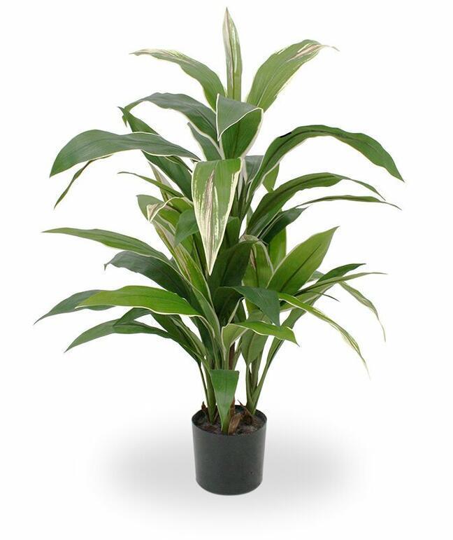 Umělá rostlina Dracena voňavá 80 cm