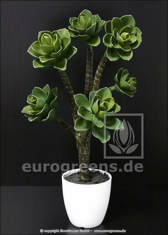 Umělá rostlina Eševéria 55 cm