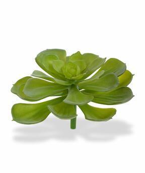 Umělá rostlina Eševéria štětin 10 cm