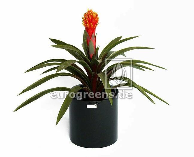 Umělá rostlina Guzmánie 65 cm