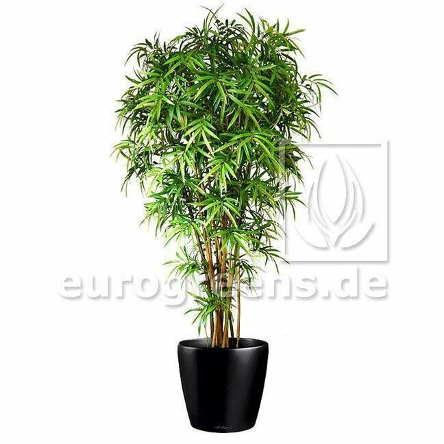 Umělá rostlina Japonský Bambus 180 cm