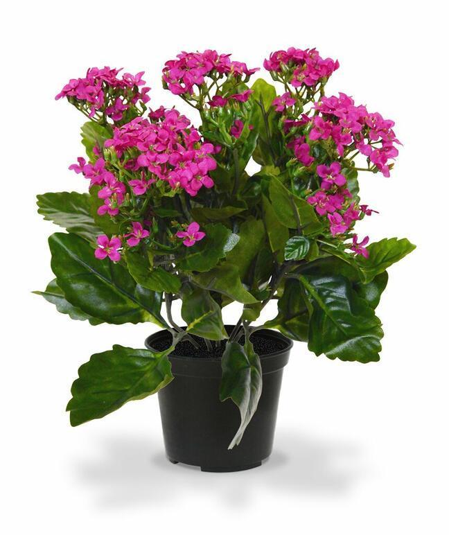 Umělá rostlina Kalanchoe fialová 30 cm