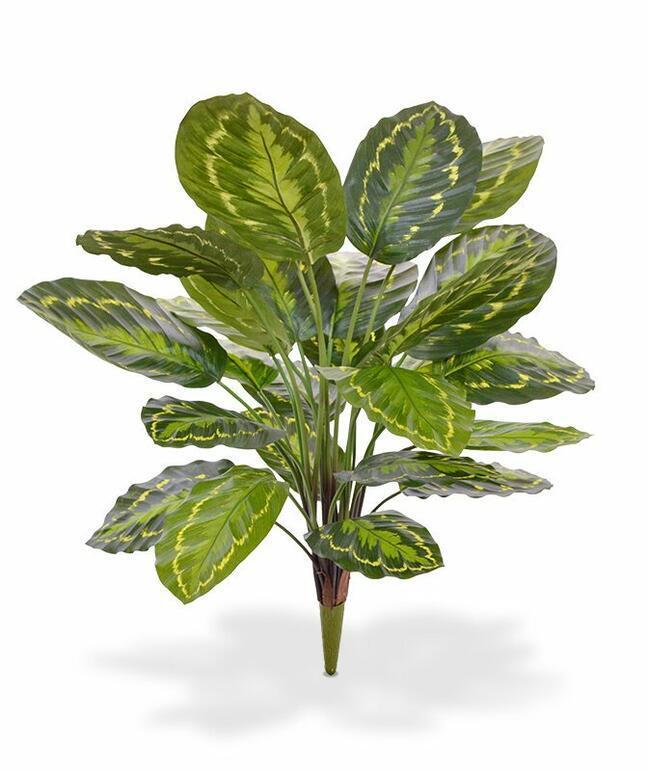 Umělá rostlina Kalatea 65 cm