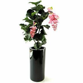 Umělá rostlina Medinila 90 cm