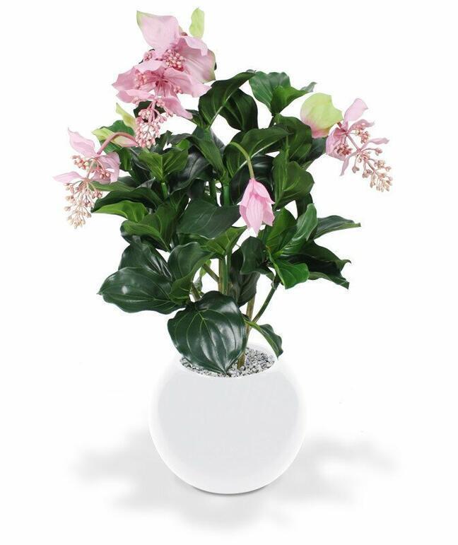 Umělá rostlina Medinila nádherná 100 cm