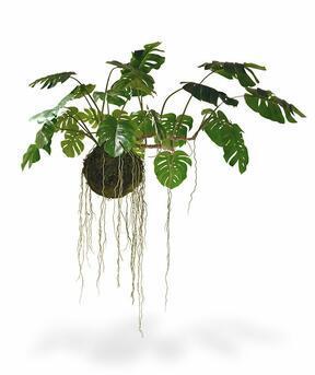 Umělá rostlina Monstera na mechové kouli