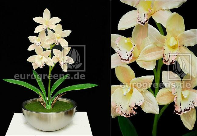 Umělá rostlina Orchidea Cymbidium smetanová 50 cm