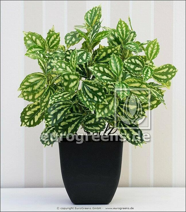 Umělá rostlina Peperomia 40 cm