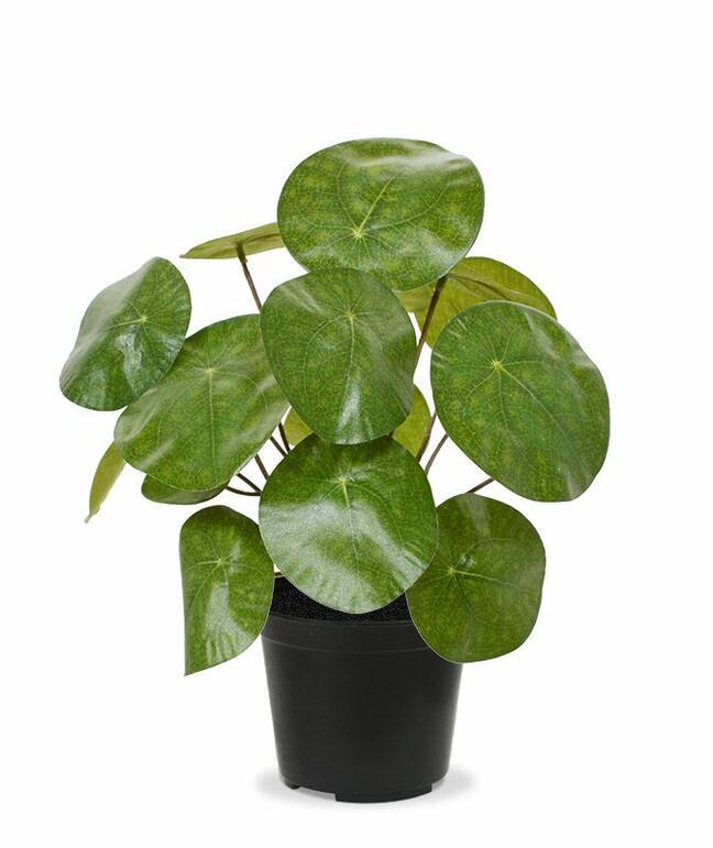 Umělá rostlina Pilea peperomioides 20 cm