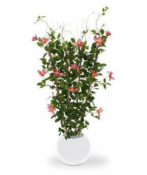 Umělá rostlina Plamínek růžová 125 cm