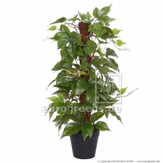 Umělá rostlina Réva na sisalových holi 50 cm