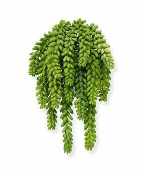 Umělá rostlina Rozchodník Morganův 30 cm