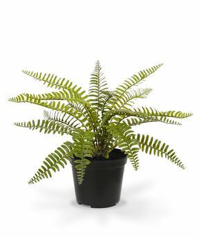 Umělá rostlina Sleziník 35 cm