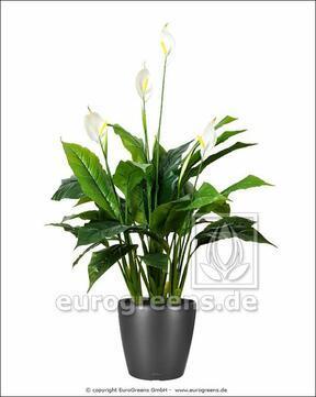 Umělá rostlina Toulcovka 100 cm
