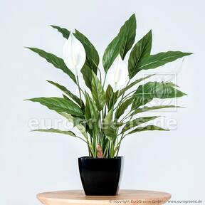 Umělá rostlina Toulcovka 50 cm
