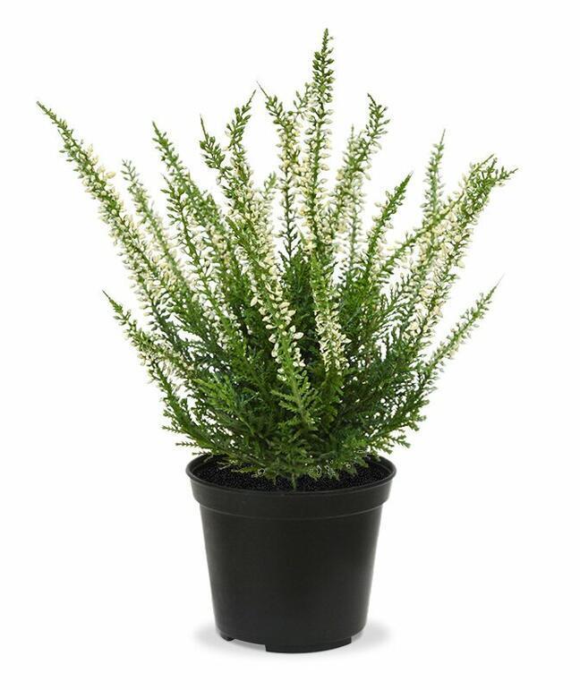 Umělá rostlina Vřesovec krémový 25 cm