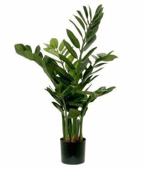 Umělá rostlina Zamiokulkas 65 cm
