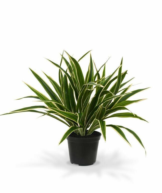 Umělá rostlina Zelenec 30 cm