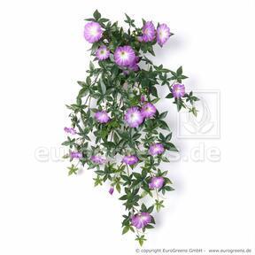 Umělá úponká Petunie fialová 75 cm