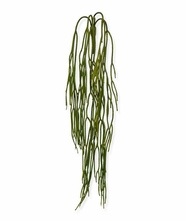 Umělá úponka Rhipsalis pilocarpa 65 cm