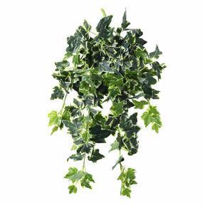Umělá úponky Břečťan bílo-zelená 80 cm