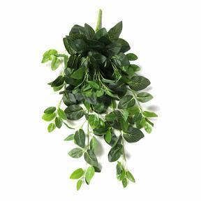 Umělá úponky fitónie zelená 80 cm