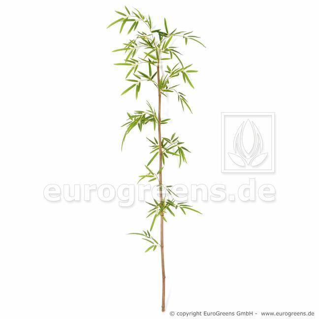 Umělá větev Japonský Bambus 150 cm