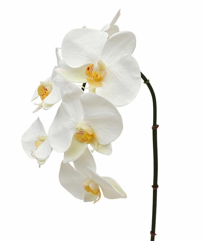 Umělá větev orchidej bílá 55 cm